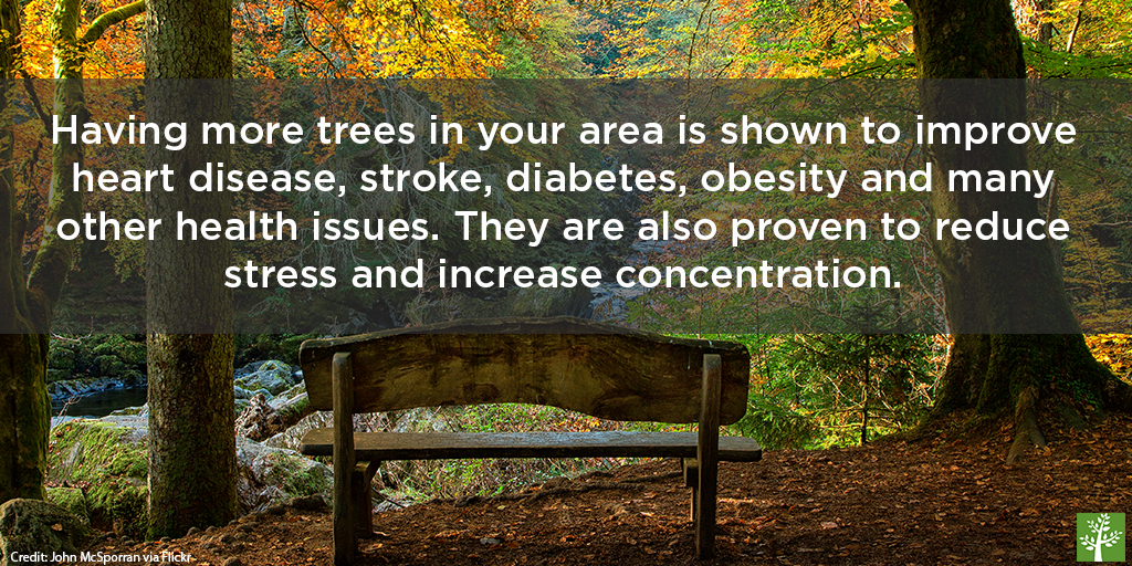 shopped-trees-are-good-for-your-health-3-john-mcsporran-via-flickr