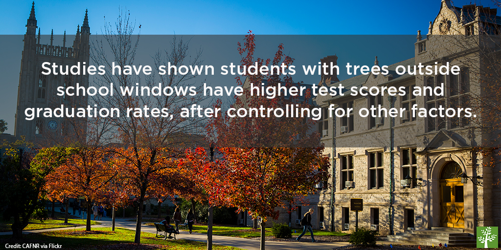 shopped-trees-contribute-to-your-success-cafnr-via-flickr
