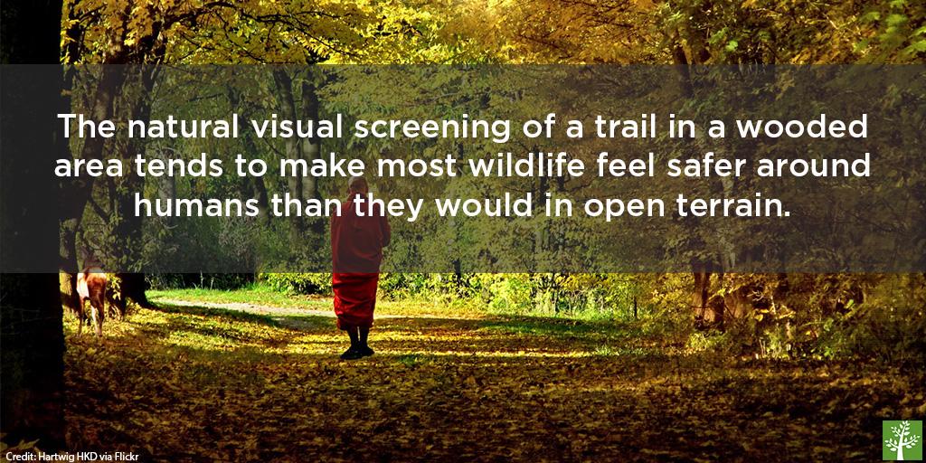 shopped-trees-bring-us-closer-to-wildlife-hartwig-hkd-via-flickr
