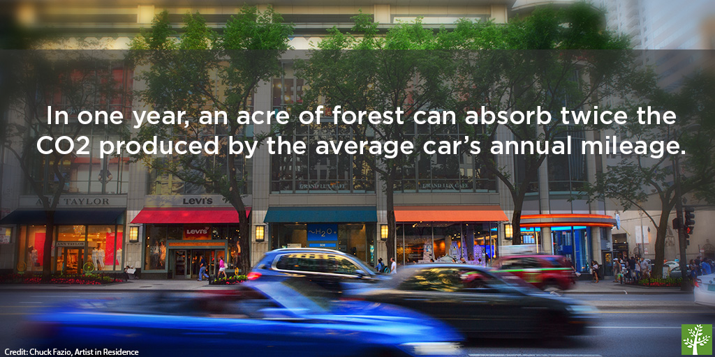 shopped-trees-offset-cars-chuck-fazio