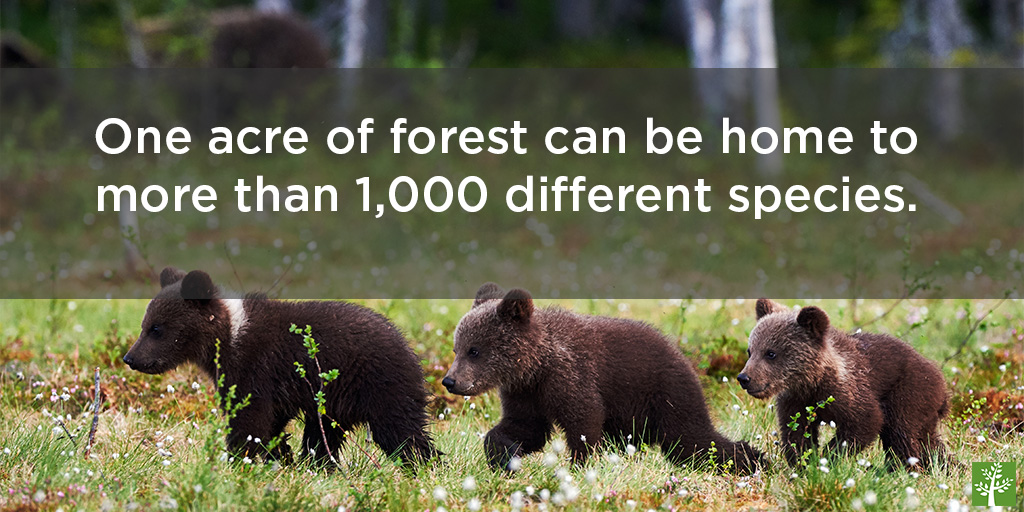 shopped-wildlife-depends-on-the-forests