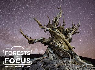 2016 Forests in Focus Winners