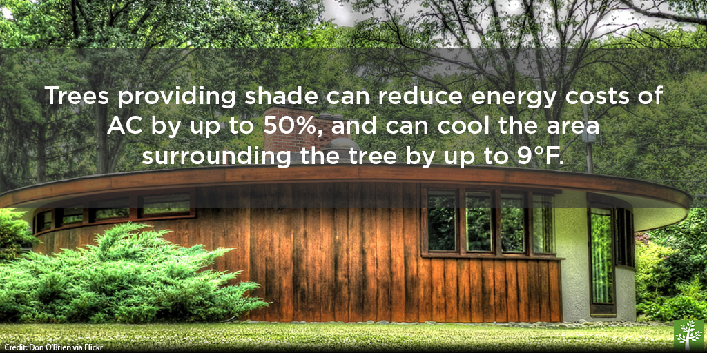 shopped-trees-reduce-air-conditioning-don-obrien-via-flickr