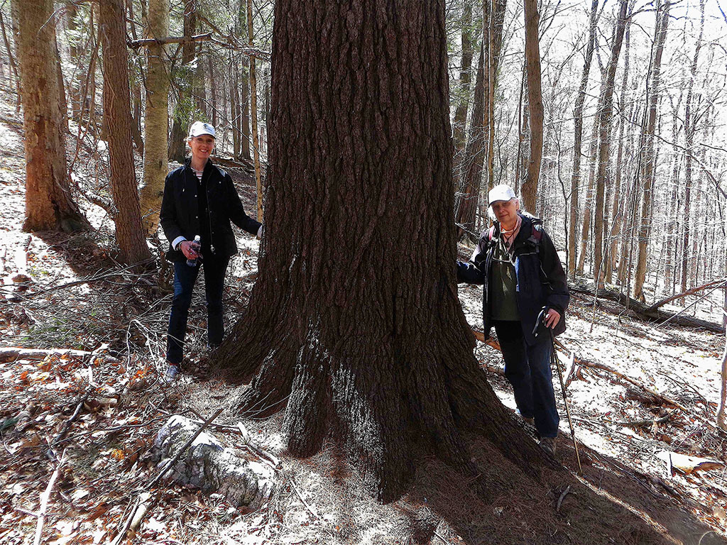 Lea Sloan, American Forests' Vice President of Communications, and Monica Leverett with the Saheda pine.
