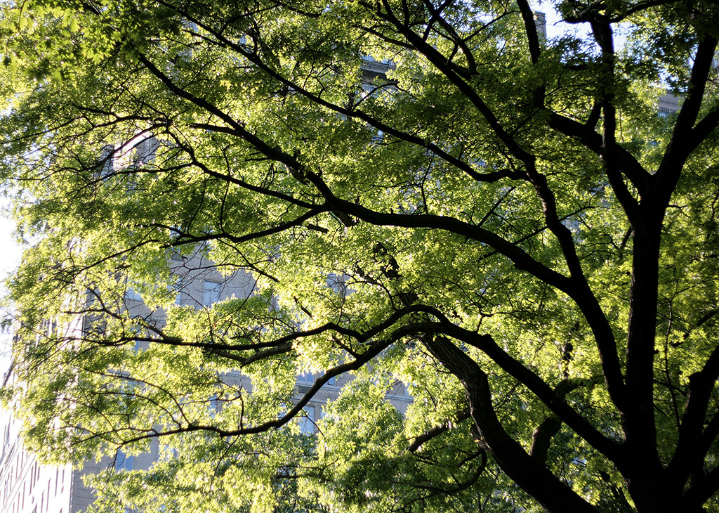 Why we no longer recommend a 40 percent urban tree canopy for Canopy of trees
