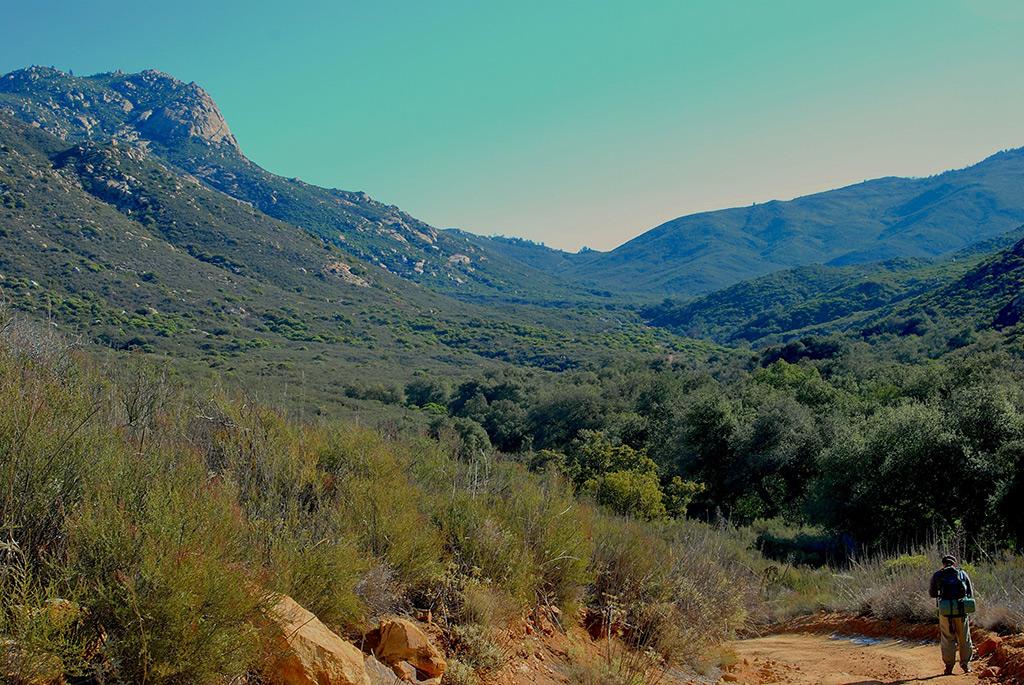 Stone Oak Elevation : National forests named after u s presidents american