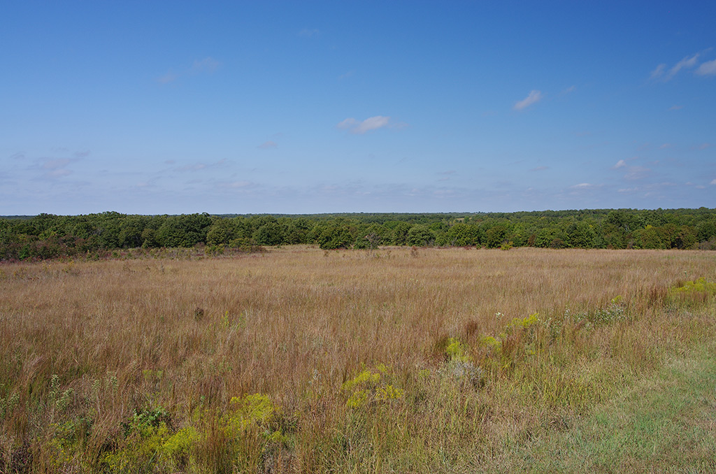 Cross Timbers landscapes are mosaics that include both forest and the surrounding prairies, which make up much of what people believe the landscape of Oklahoma to look like.