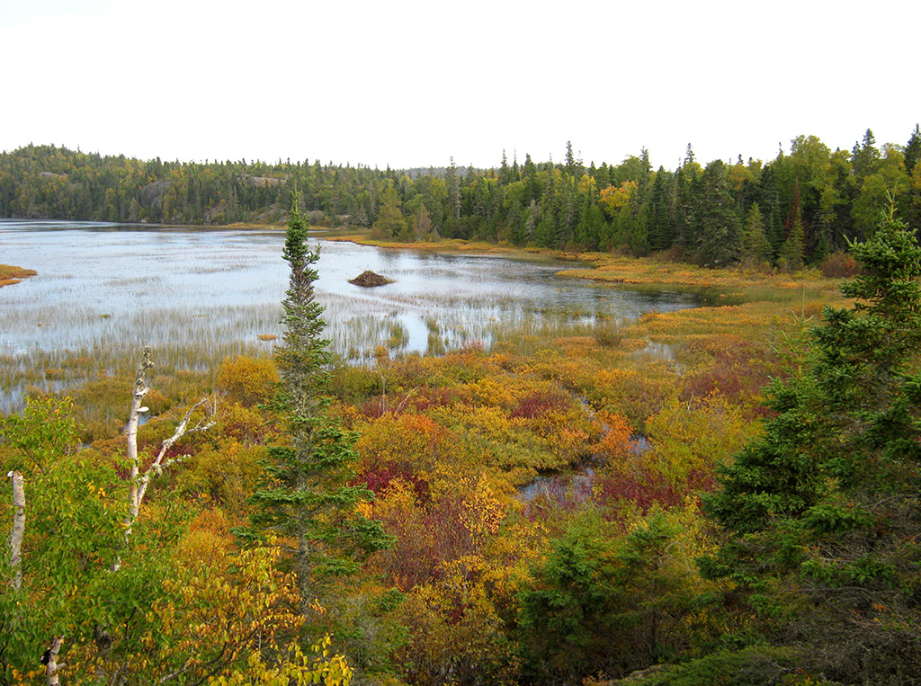 Typical boreal forest lake with beaver lodge in Pukaskwa National Park.