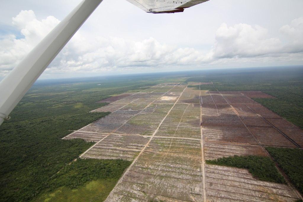 Palm oil plantation deforestation