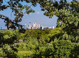 Tree-framed skyline