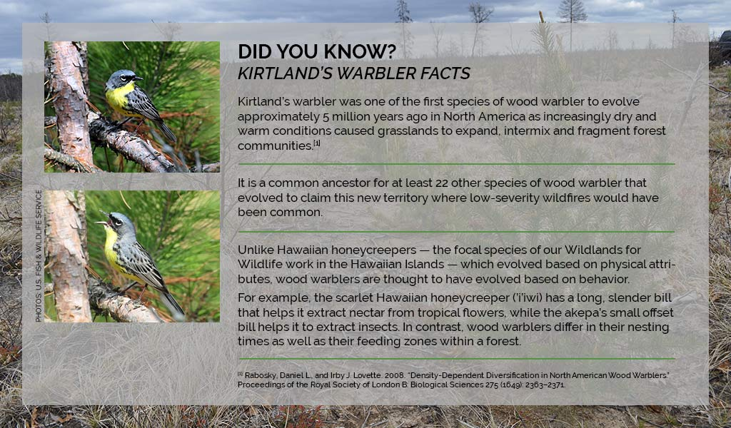 A bright future for Kirtland's warbler in the Northern Great
