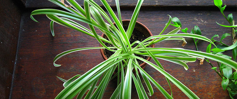 Low maintenance plants for your indoor garden american forests - Low maintenance plants for indoors ...