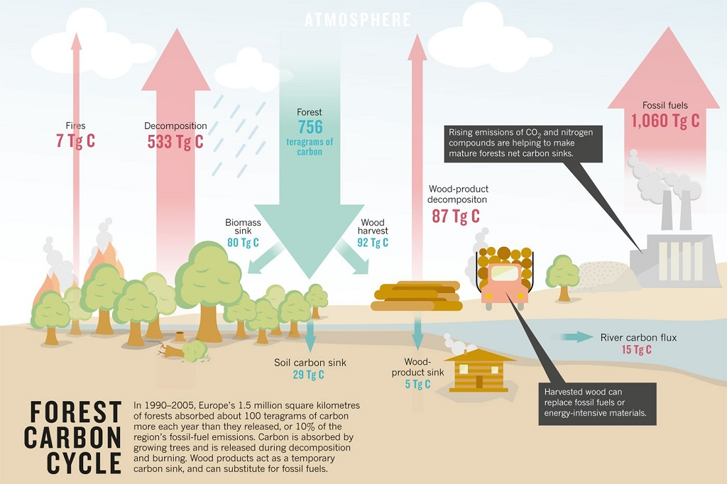 forests as carbon sinks - american forests diagram carbon sources and sinks #11