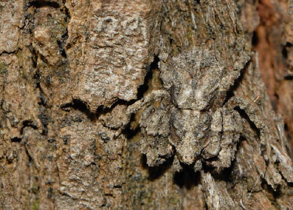 Can You Spot These Forest-Dwelling Masters of Camouflage?