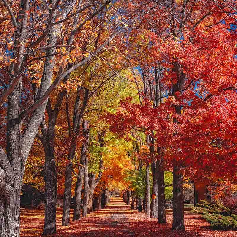 The Science Behind Fall Foliage American Forests