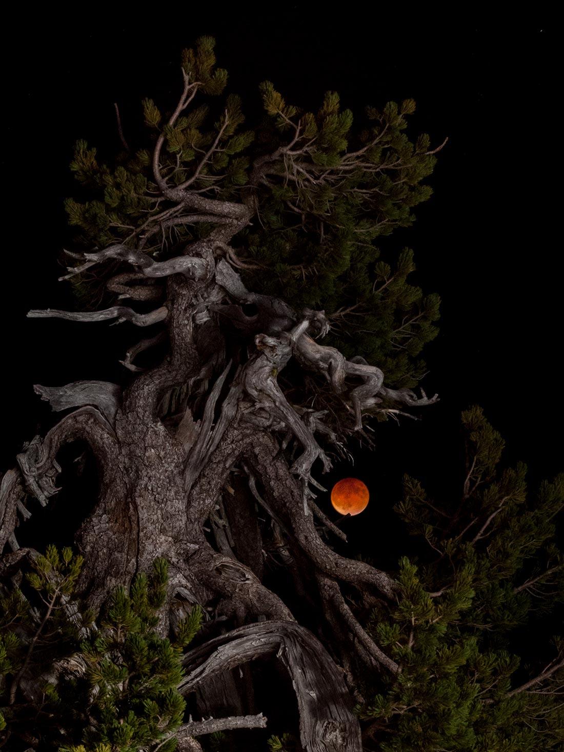 """Guardian of the Blood Moon"" by Joaquin Baldwin"