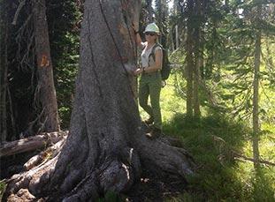 Melissa hugging a large whitebark pine