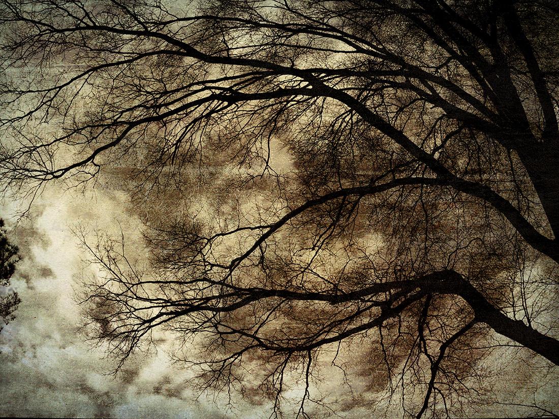Shades of Winter by Anita Storino