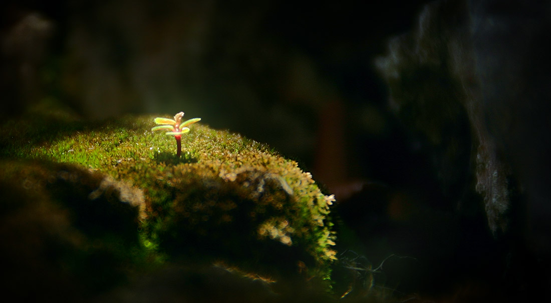 Sprout of Life by Joaquin Baldwin