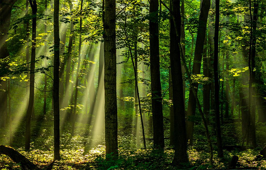 Sunshine Makes My Soul Shine by Naomi Fortino