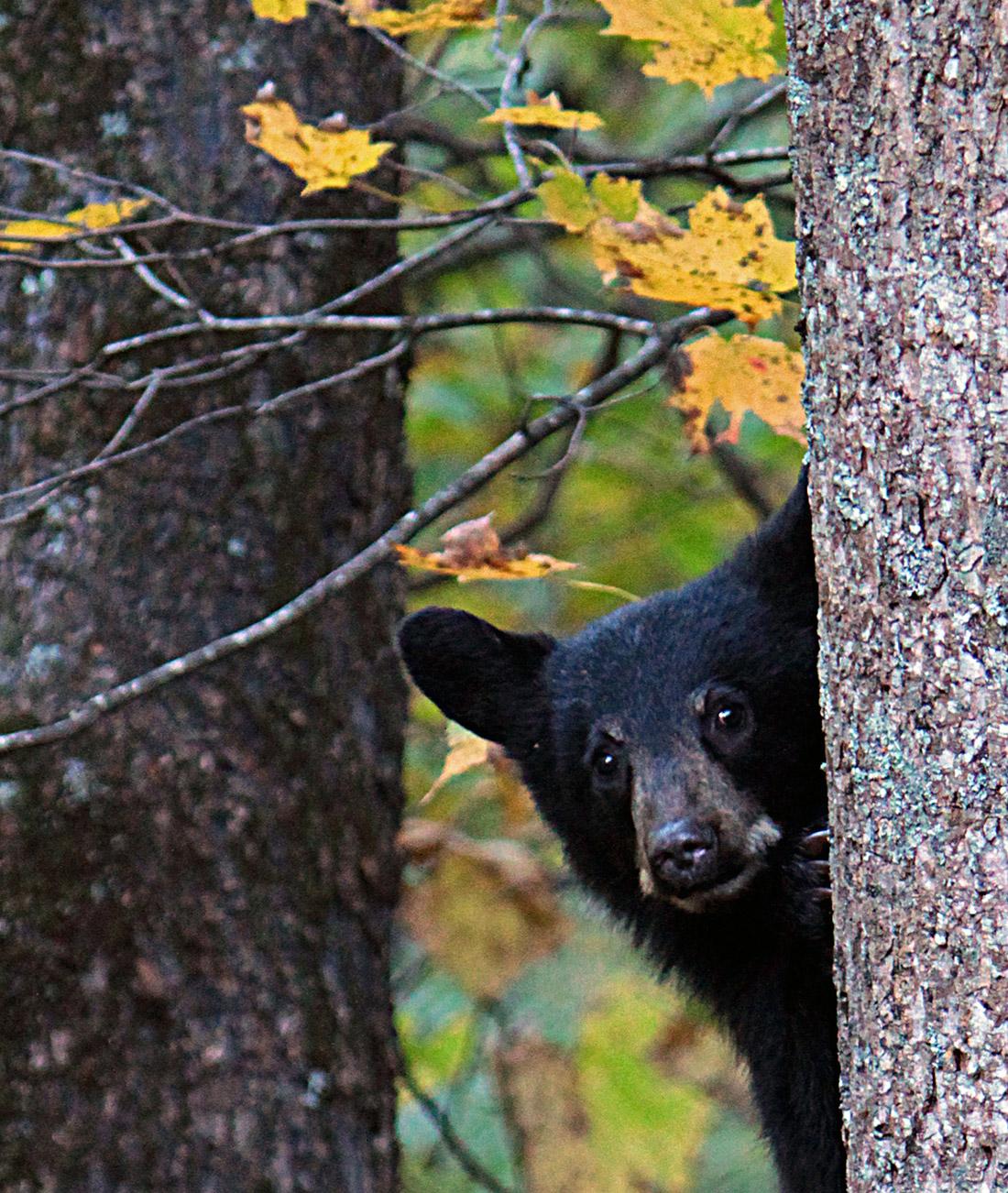 Curious cub-Peggy-Yaeger