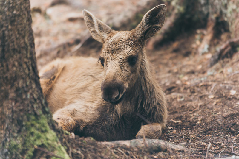 5 Of The Cutest Forest Critters American Forests