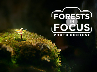 Forests in Focus photo contest
