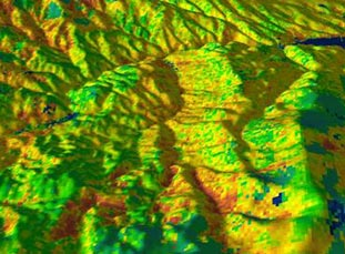 LIDAR forest map
