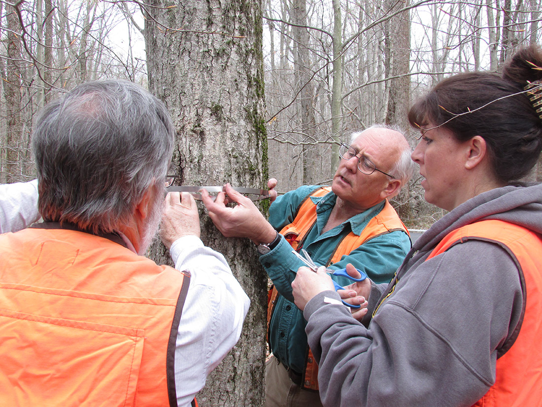 Scientist Jess Parker and volunteers measuring a tree