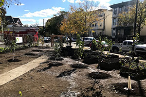 boston employee tree planting site