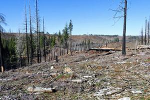 california wildfire restoration site