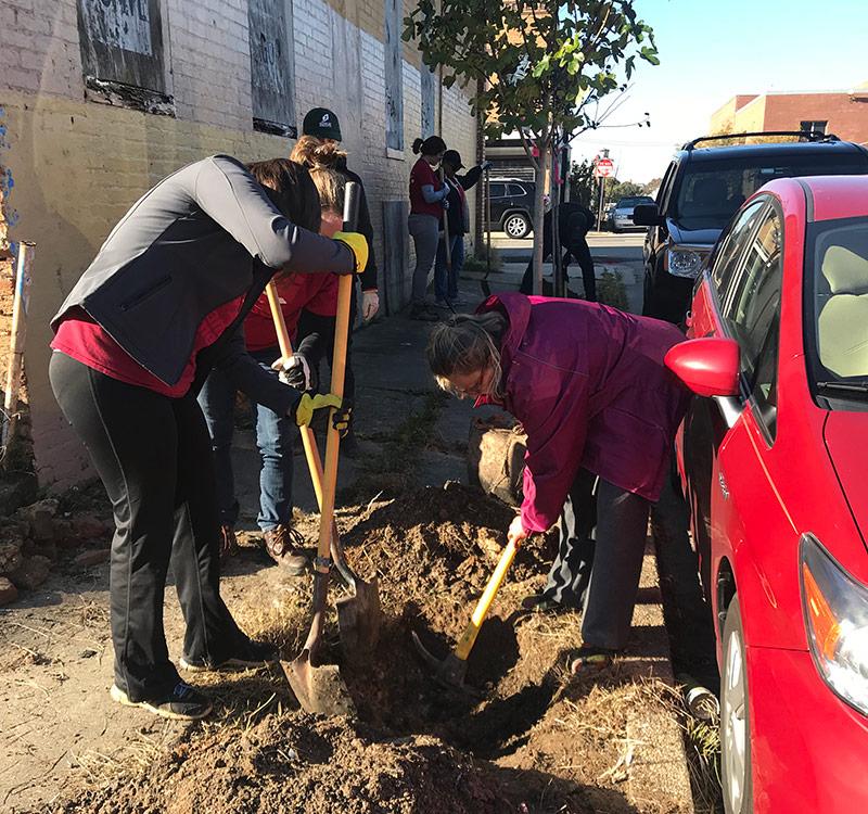 volunteers planting trees in baltimore