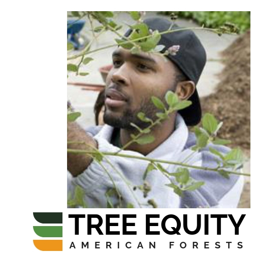 Creating tree equity