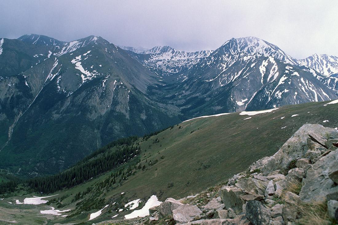Colorado Treeline