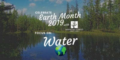 water forests healthy protection