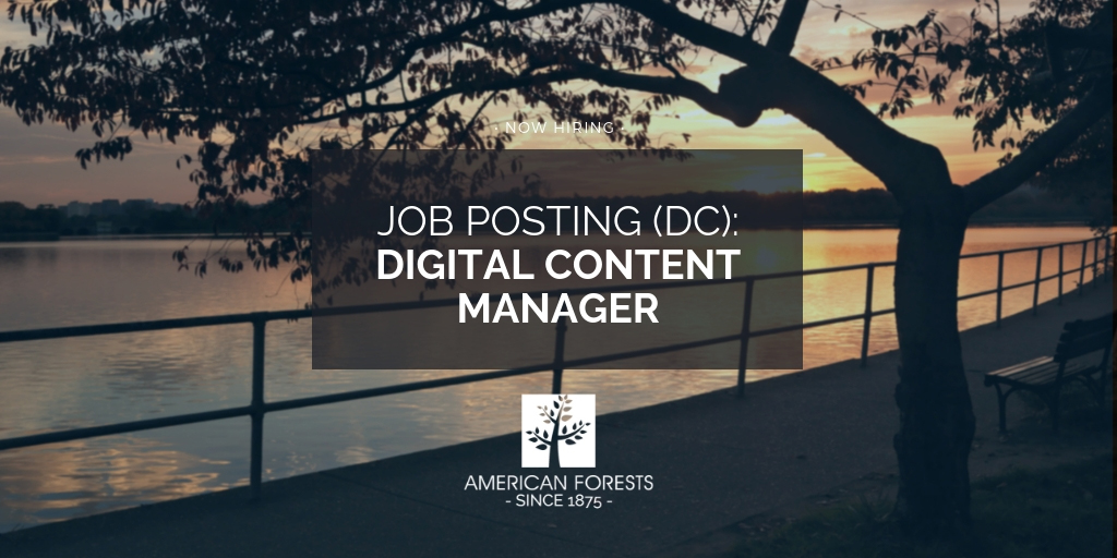Digital Content Manager jobs washington dc 2019 now hiring 2