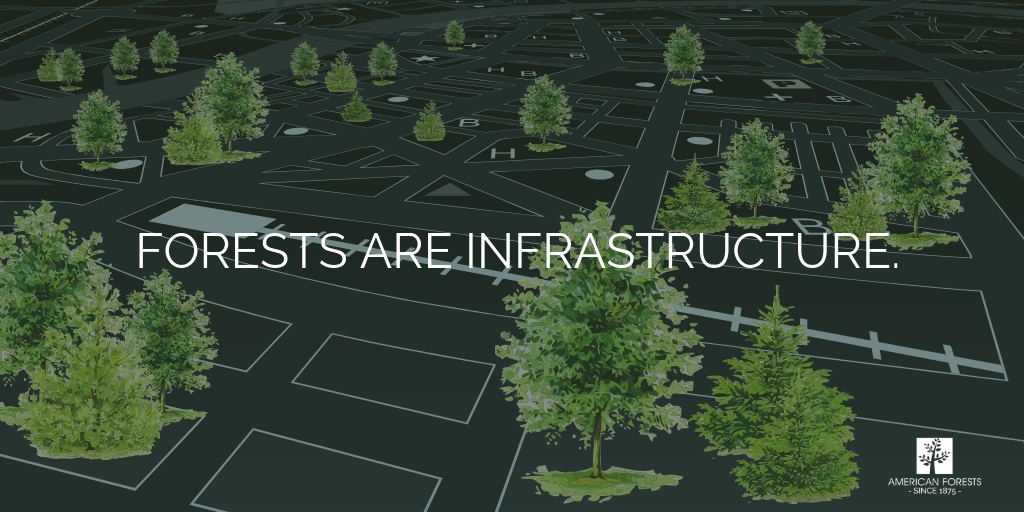 forests infrastructure week trees urban canopy forestry