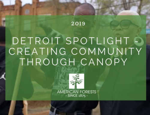 Detroit Spotlight — Creating Community through Canopy