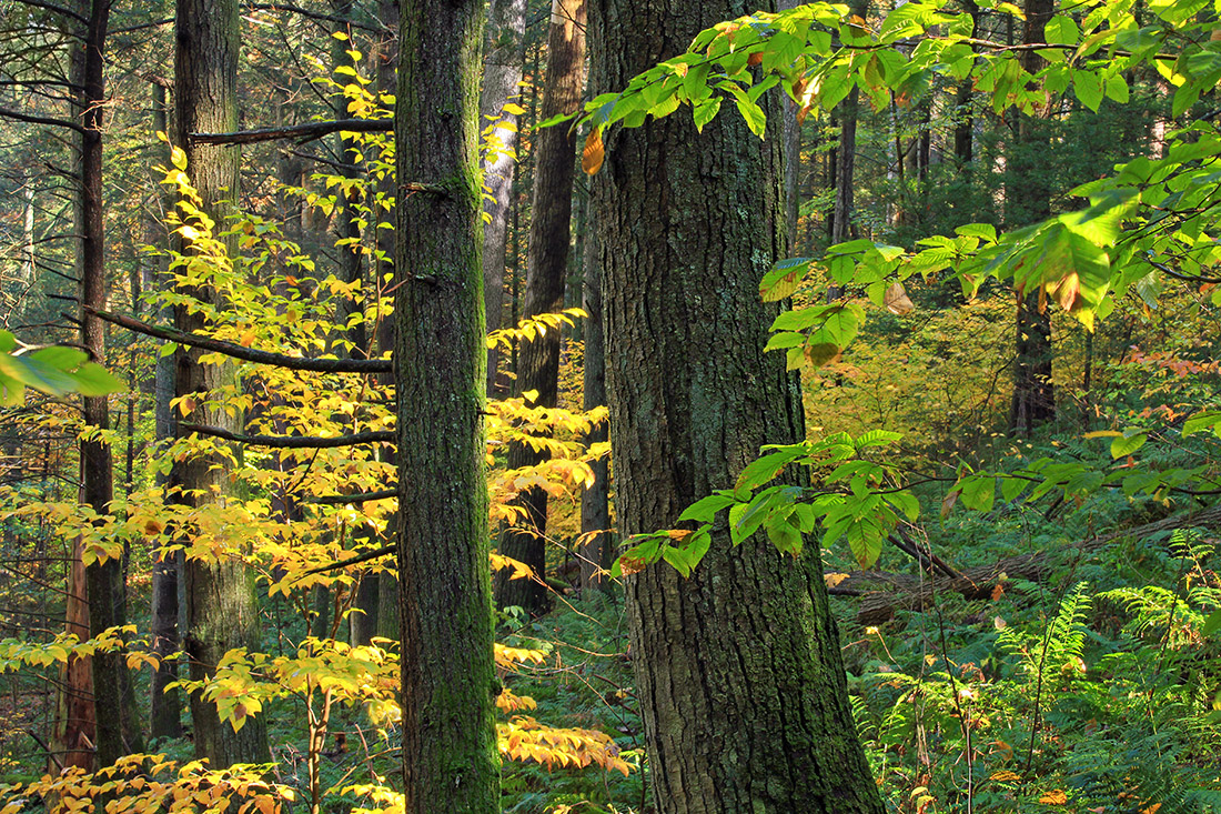 Trees On The Move American Forests