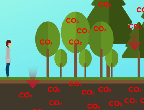 American Forests Co-Authors New Study on the Impacts of Forest Management on Soil Carbon