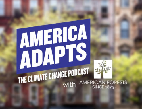 American Forests Featured on the America Adapts Podcast
