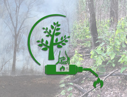 Hoosier National Forest Partners with American Forests for Oak Regeneration