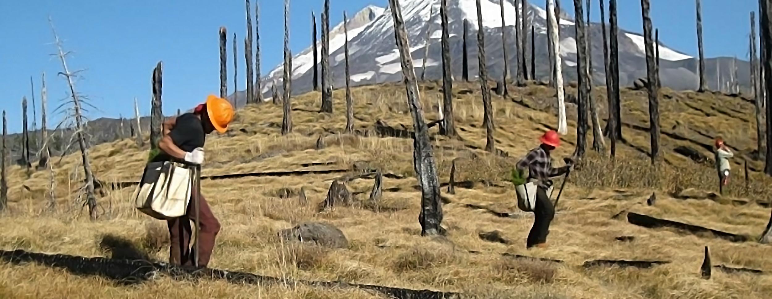 reforestation planting mountain 2019