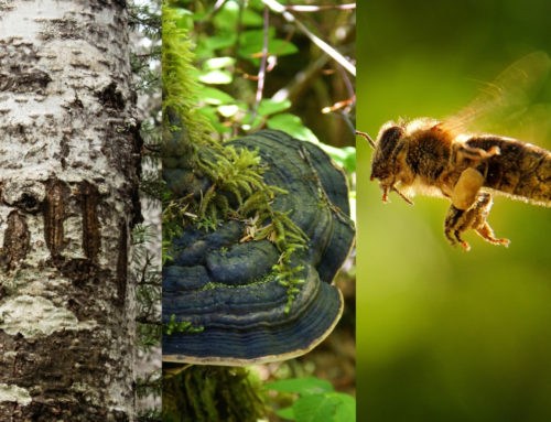 The Interconnectedness of Bears, Mushrooms and Bees