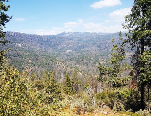 Providing Public Comment to the Sierra and Sequoia National Forests