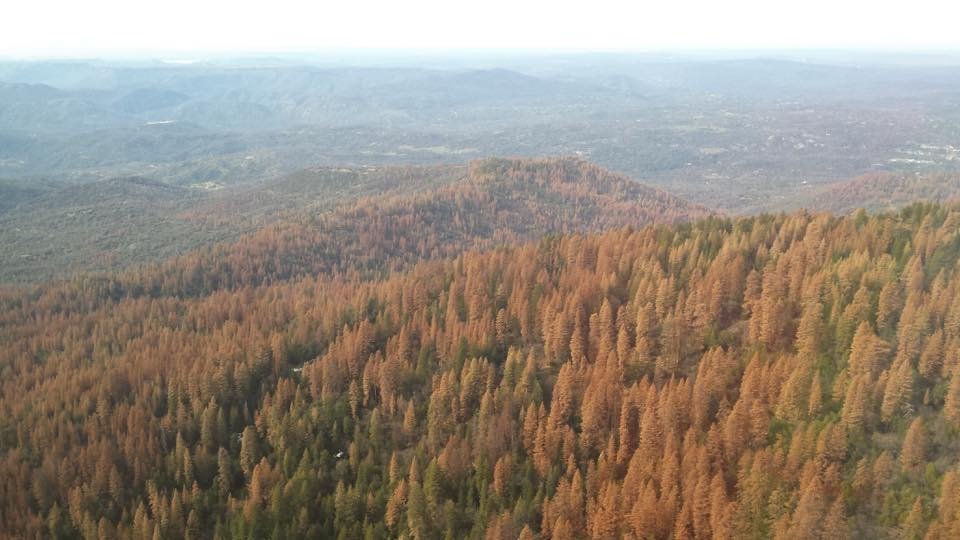 In 2015, when this aerial photo was taken, the Sierra National Forest had nearly 6 million dead trees; however, today, it is cumulatively at 35.5 million.