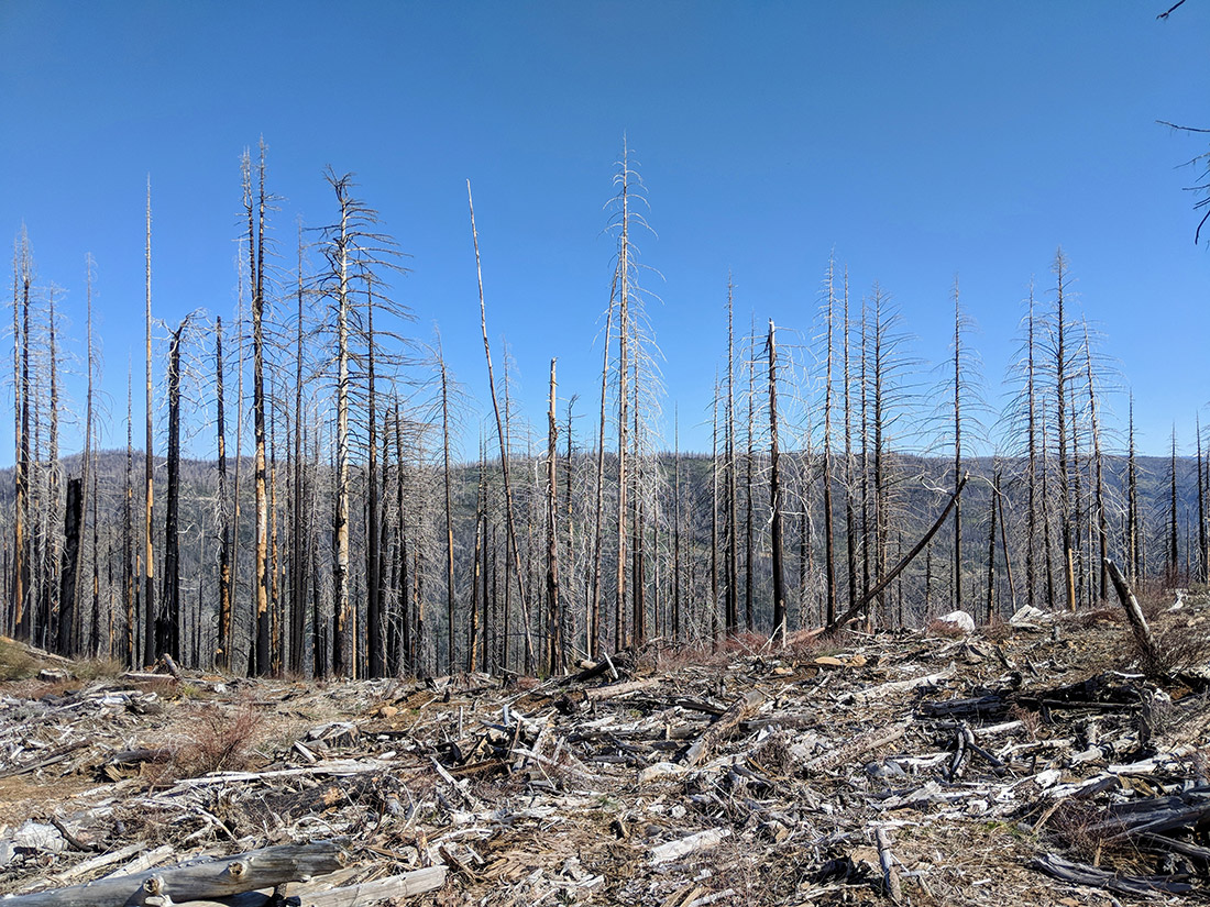 In 2014, the King Fire burned more than 97,000 acres in El Dorado County, Calif.