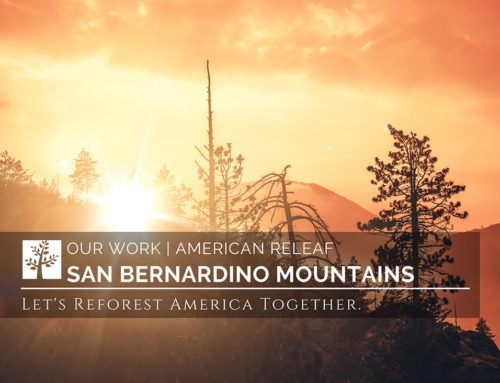 Developing a Climate-Smart Restoration Plan for San Bernardino