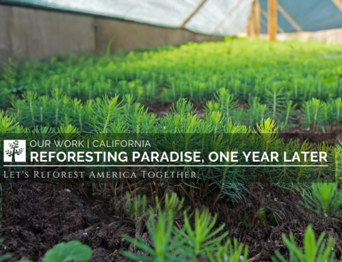 Reforesting Paradise, One Year Later