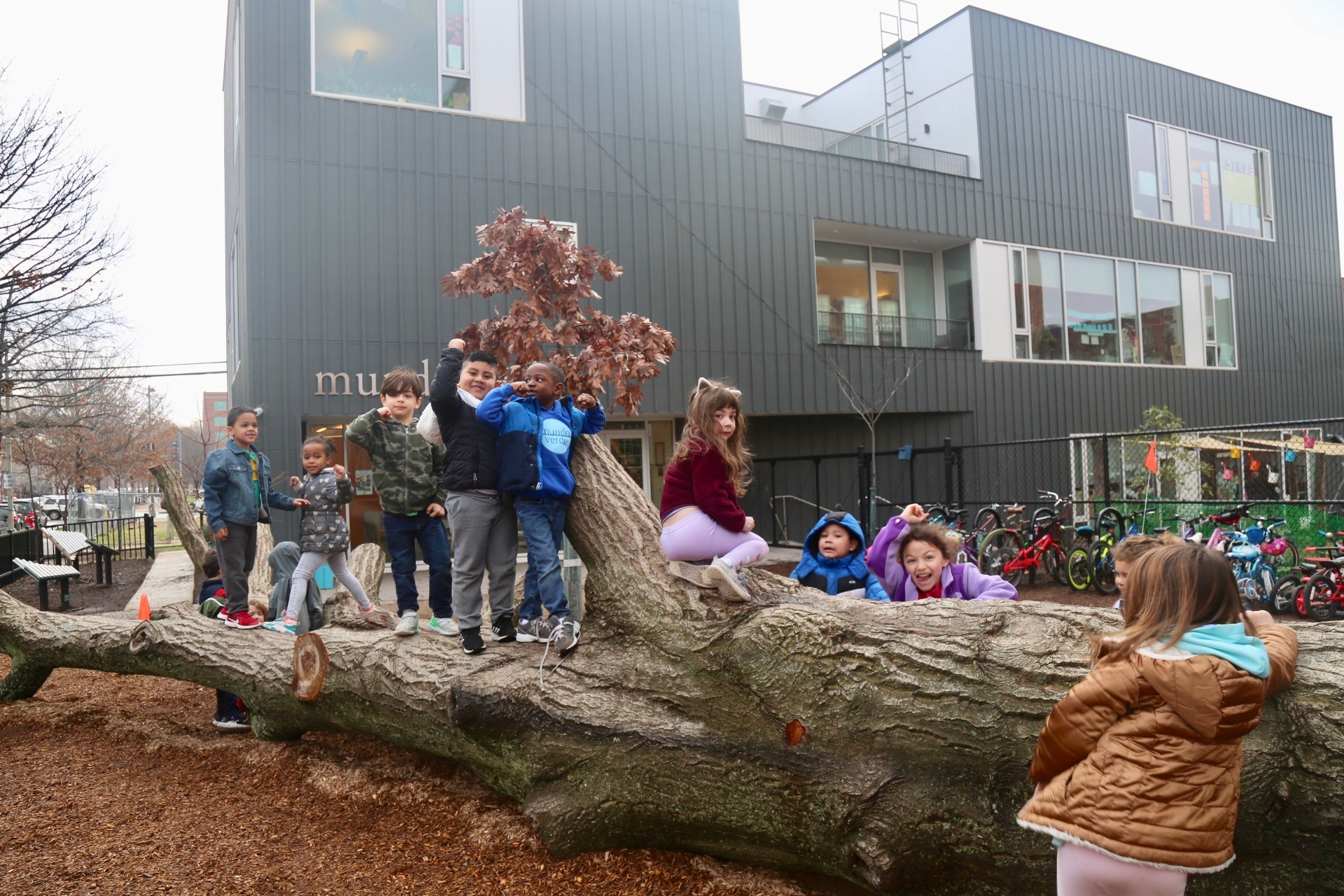A dying willow oak, which was slated to be cut down in a nearby neighborhood, is now a focal point for Mundo Verde's playground.